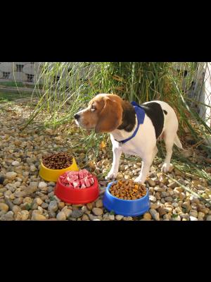 Castron Din Plastic Puppy